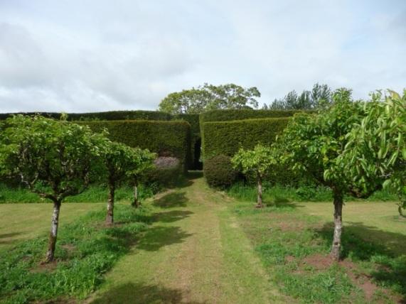 Avenue of pear trees