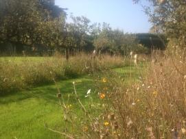 Walled garden late summer
