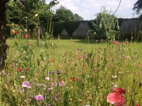 Walled garden in spring