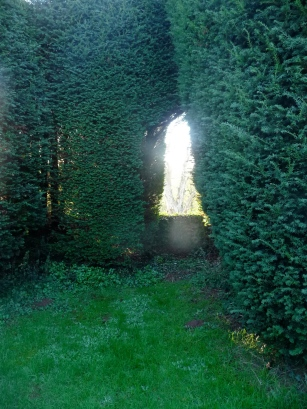 Window in the yew